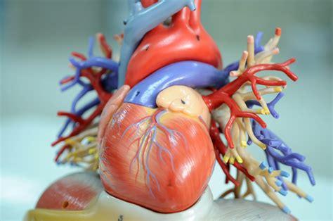 alimentazione maratoneta il cuore organo maratoneta runcard