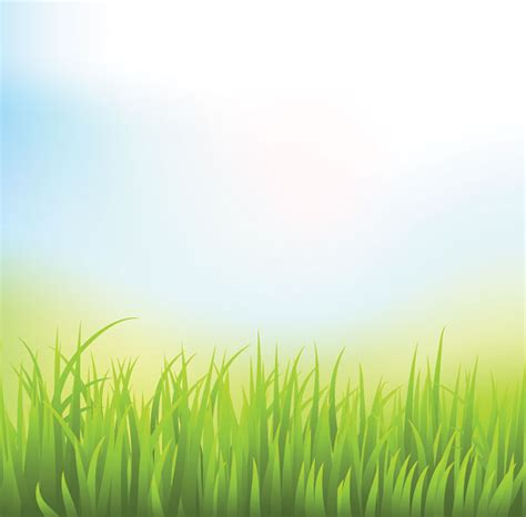 wallpaper abstract grass abstract green grass background with blue sky free