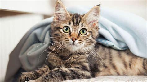 vous avez un chat selon vous 234 tes solitaire