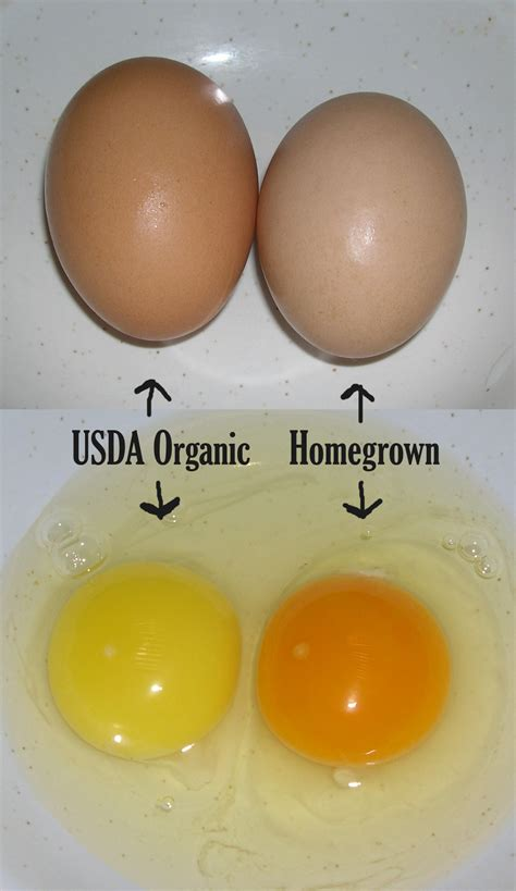 are store bought organic eggs the real deal organic olivia organic olivia