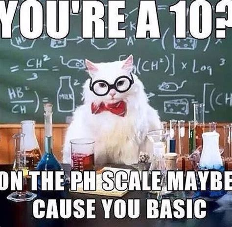 64 best chemistry cat meme images on pinterest funny
