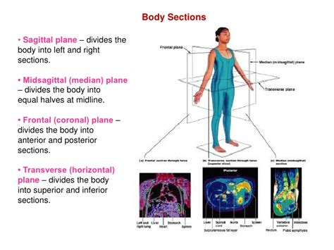 planes of section of the body introduction to anatomy