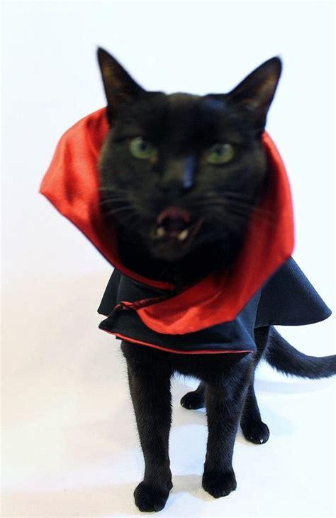 cat costume dracula vampire cat costume cape