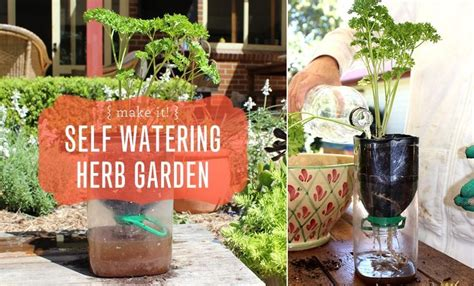 diy self watering herb garden 17 best images about moomah art projects on pinterest