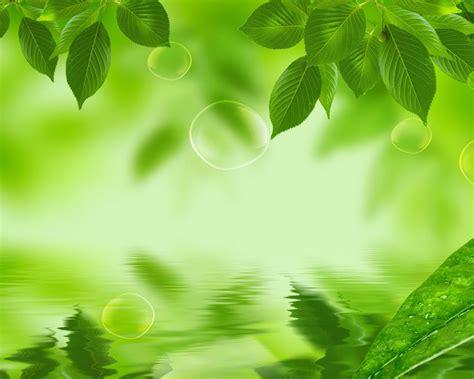 wallpaper daun hijau hd background daun hijau 10 background check all