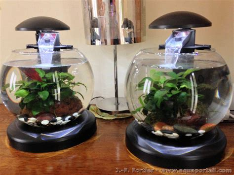 aquarium 3l et cr 233 ation d un nouvel aquarium forum aquarium