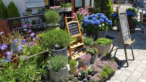 free images plant backyard garden flora flowers