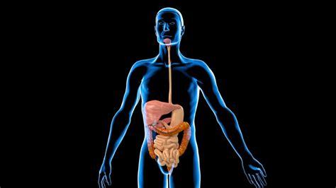 imagenes en 3d del cuerpo humano ser humano cuerpo colon animaci 243 n hd stock video