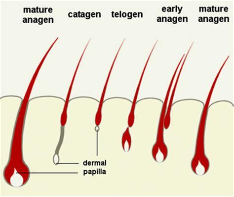 creatine 5 alpha reductase 頭髮生長因子 hair growth factors vegf