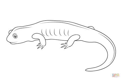 tiger salamander coloring page salamander drawing coloring pages