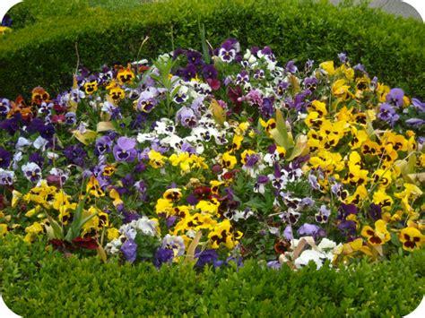 imagenes jardines con flores fotos de jardines con flores y piedras
