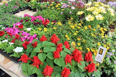 vendita piante da giardino piante da giardino ornamentali il sorbo vivai di