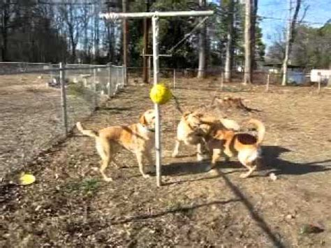 tetherball for dogs tetherball
