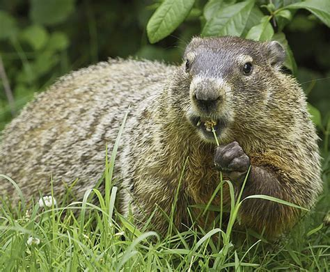 groundhog day yts ag winter or early only the groundhog knows