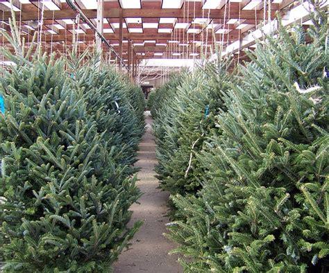 christmas xmas trees nursery winter public domain
