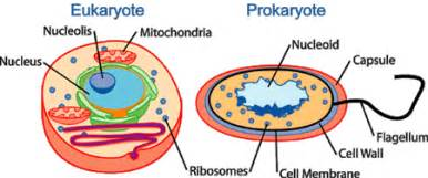 Human physiology cell physiology wikibooks open books for an open