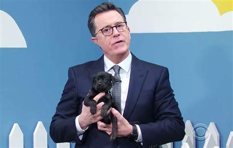 stephen colbert puppies stephen colbert runs hilarious puppy adoption segment rescue rescue