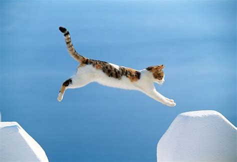 How To Stop A Cat From Jumping On Furniture by Tabby Cats Los Gatos And Santorini Greece On