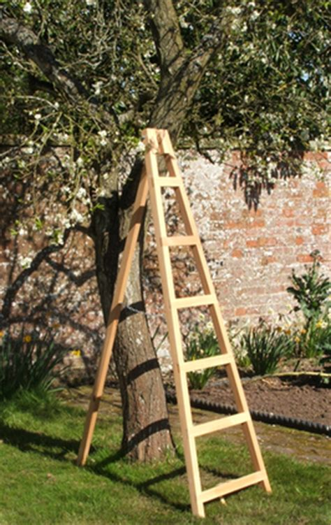 wooden orchard ladder