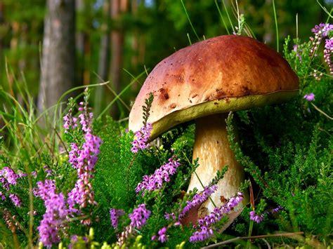 wann pilze sammeln pilze aus s 252 dtirol pilze sammeln in s 252 dtirol