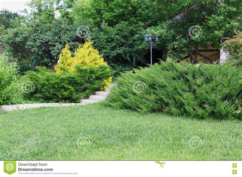 backyard trees and shrubs landscape design evergreen bushes and path stock photo