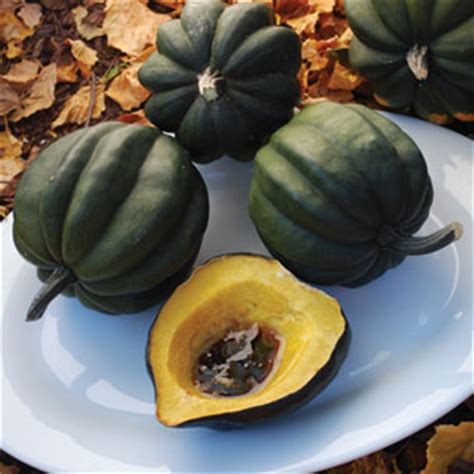 Table Squash by Table A P Whaley Seed Company