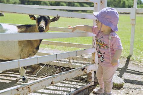 el jarama anapri ocio en familia en granja escuela cei el jarama i