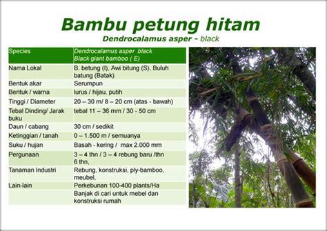 bambu petung hitam
