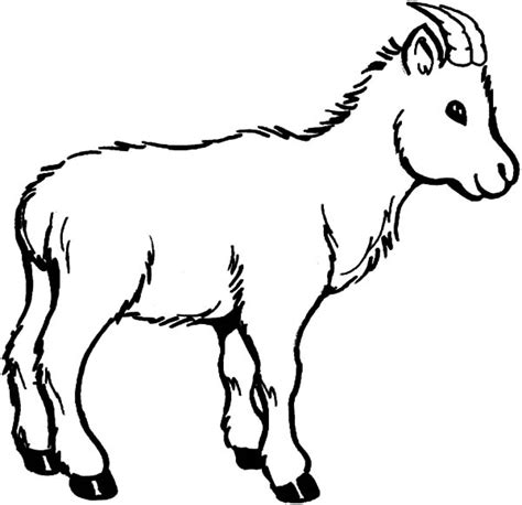 coloring pages of goat goat coloring pages clipart best