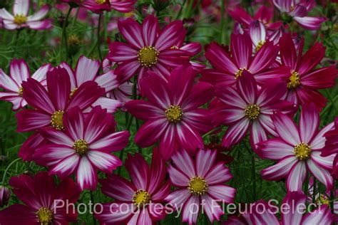 which flowers are easy to grow from seed red dirt ramblings