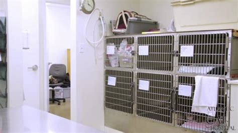 and cat hospital atlantic cat hospital halifax ns 6169 quinpool rd canpages