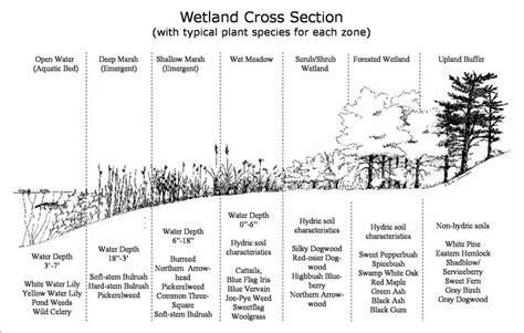 cross section types wetland cross section la landscapes green technology
