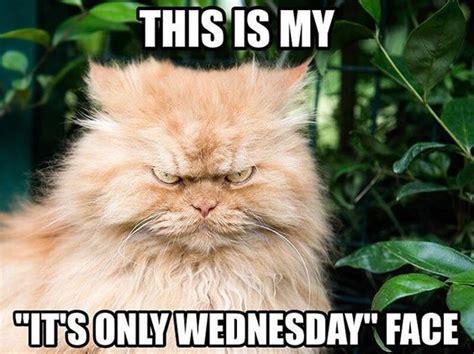 Wednesday Meme Funny - girl meme face quotes