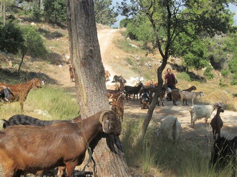 herding tigers be the leader that creative need books five leadership lessons from herding goats dworin consulting