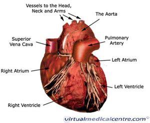 can a psychiatric prognosis hurt you in a heart failure heart disease information myvmc