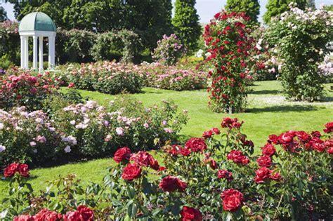 rose garden themes awesome roses gardening ideas landscaping gardening ideas