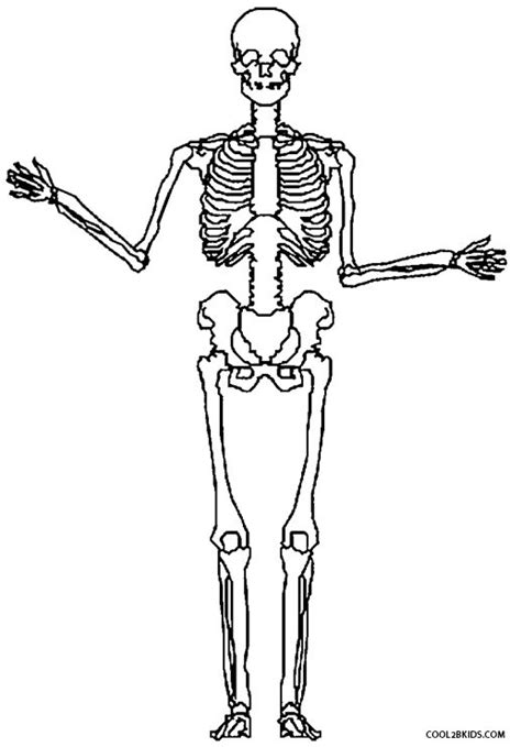 anatomy coloring pages skeleton printable skeleton coloring pages for cool2bkids