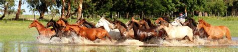 caballo cogida brutal por detras tropillas 171 daniel wagner