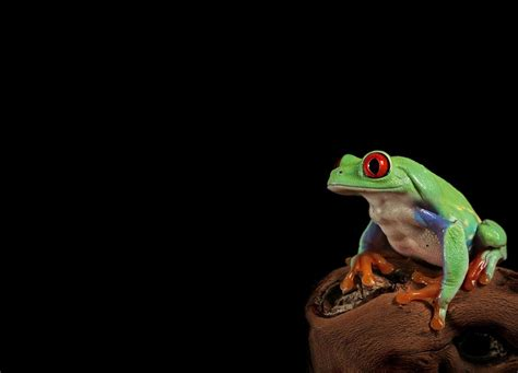 colored definition colored frog high definition wallpapers world