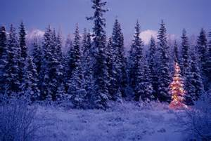 1221010 lighted christmas tree in forest snow chugach