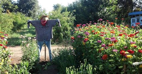 Landscape Fabric Well Windmill Farm Planting Flowers And Vegetables Using