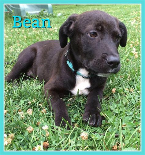 beans for dogs bean safe rescue