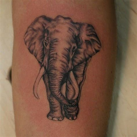 elephant tattoo crotch the 25 best ideas about realistic elephant tattoo on