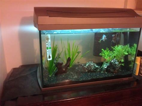 L Fish Tank by 60l Tetra Fish Tank Set Up In Condition Frome