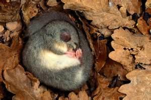 hände schlafen immer ein gute frage warum halten manche tiere einen winterschlaf