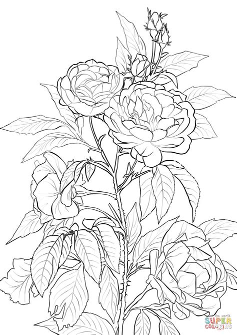 rose coloring pages online rose coloring page free printable coloring pages