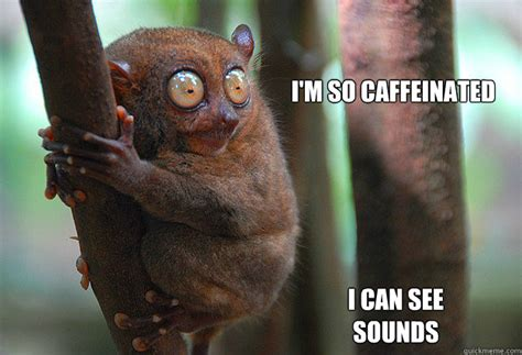 Too Much Coffee Meme - i m so caffeinated i can see sounds caffeine quickmeme