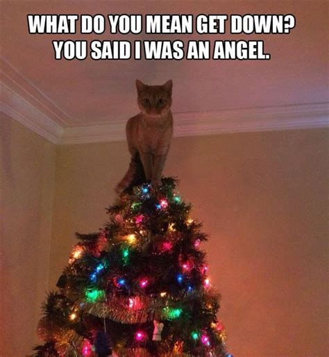 Cat Christmas Tree Meme - funny cat on top of christmas tree dump a day