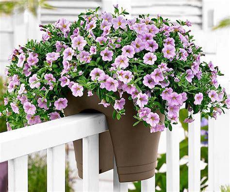 terrazzo fiorito tutto l anno idee per un balcone fiorito idee green