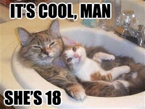 Pussy Cat Meme - funny cat life cats life fun funny cat images image of